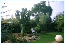 Cactus area