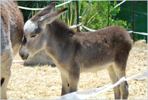 Visit the Donkey Sanctuary at Estepona