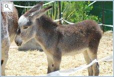 Visit the Donkey Sanctuary at Estepona