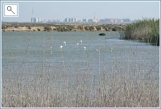 Lakes with wild birds