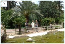 Palm gardens in Elche