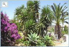 Garden with Spanish foliage