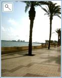 Palm Tree Lined Promenade
