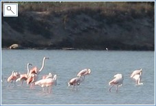Wild flamingos on the salt lakes 2 minutes from the villa