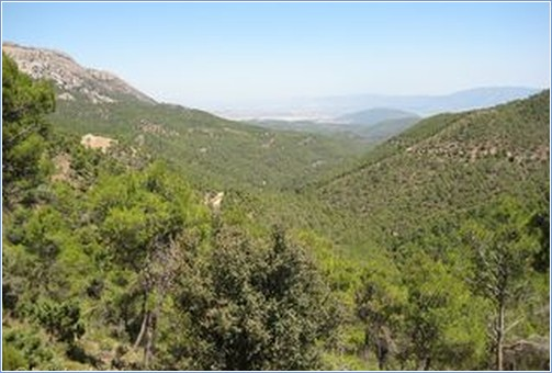 Sierra D'Espuna