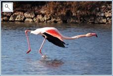 See if you can spot a flamingo along the coastal strip.