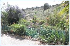 Cactus in my garden