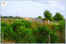 Orange Grove