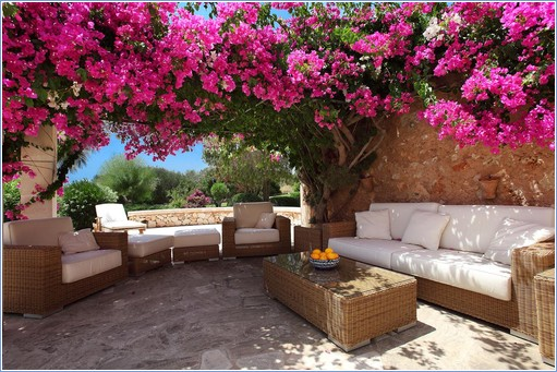 Poolside bouganvillea covered terrace