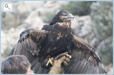 the bird of prey show in the hills behind Benalmadena