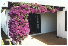 Bougainvillea by the side door