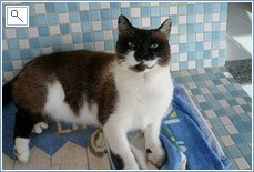 Marmite the villa cat who passed away August 2013