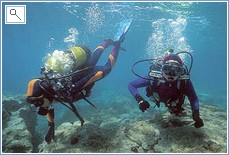 Scuba dive the waters of Puerto de Mazarron
